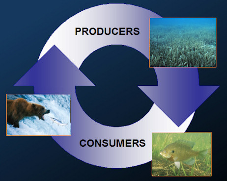 Ecosystem cycle graphic